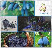 Саженцы плодово-ягодных в Актау